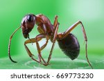 the ant in the macro scale on a ...   Shutterstock . vector #669773230