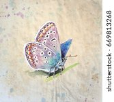 copper butterfly  lycaenidae ... | Shutterstock . vector #669813268