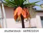landscaping flower garden.... | Shutterstock . vector #669821014