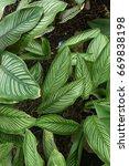 green leaf texture. leaf... | Shutterstock . vector #669838198