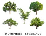 isolated tree on white... | Shutterstock . vector #669851479