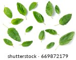 Holy Basil Leaf Isolated On...