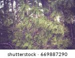 early morning light in the pine ... | Shutterstock . vector #669887290