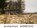 spooky big branches of broken... | Shutterstock . vector #669887644