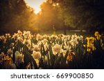 beautiful blooming flowers in... | Shutterstock . vector #669900850