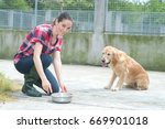 animal shelter volunteer... | Shutterstock . vector #669901018