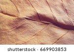 dry leaf  | Shutterstock . vector #669903853