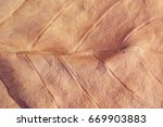 dry leaf | Shutterstock . vector #669903883