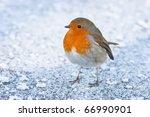 Christmas Winter Robin On Icy...