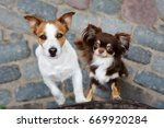 two adorable  small dogs posing ... | Shutterstock . vector #669920284