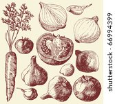vegetable set  hand drawn... | Shutterstock .eps vector #66994399
