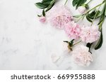 Beautiful Pink Peony Flowers O...