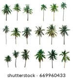 collection palm coconut ... | Shutterstock . vector #669960433