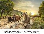 Indian Farmer Plowing Rice...