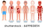 five systems of human body.  | Shutterstock . vector #669983854