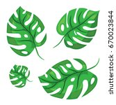 cartoon tropical palm leaves.... | Shutterstock .eps vector #670023844