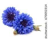 Blue Cornflower Herb Or...