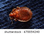 bed bug on pillowcase | Shutterstock . vector #670054240