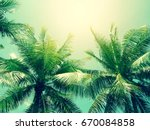 Coconut Palm Tree In Vintage...