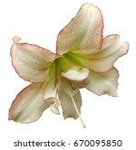 white red big flower.  white... | Shutterstock . vector #670095850