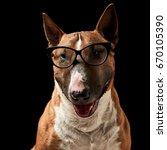 portrait of purebreed bull...   Shutterstock . vector #670105390