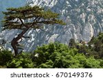 Curvy Pine Tree With Mountains...