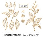 set of tea bush branches with... | Shutterstock .eps vector #670149679
