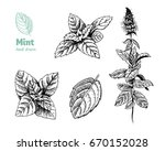 detailed hand drawn vector... | Shutterstock .eps vector #670152028