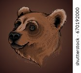vector color bear head... | Shutterstock .eps vector #670192000