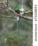 resplendent quetzal perched on... | Shutterstock . vector #670208893
