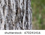 A Well Camouflaged Waved Sphin...