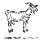 goat farm animal livestock....   Shutterstock .eps vector #670249714