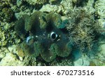 open giant clam at great...   Shutterstock . vector #670273516