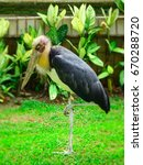Small photo of The Lesser adjutant stork (Leptoptilos javanicus) in nature