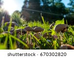 mushrooms in sunlight group of... | Shutterstock . vector #670302820