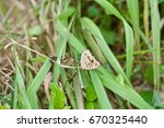 Small photo of butterfly ingraft on grass. butterfly hybridize