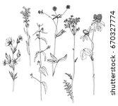 vector set of ink drawing wild... | Shutterstock .eps vector #670327774