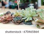 succulent plants | Shutterstock . vector #670465864