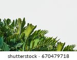 natural background  tropical... | Shutterstock . vector #670479718