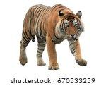 Male Of Bengal Tiger  Panthera...
