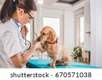 young female veterinarian... | Shutterstock . vector #670571038