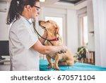 young female veterinarian...   Shutterstock . vector #670571104