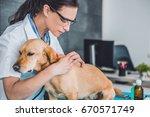 young female veterinarian... | Shutterstock . vector #670571749