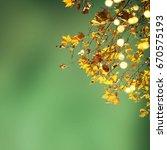 autumn leaves | Shutterstock . vector #670575193