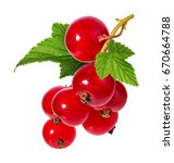 Red Currant Isolated On White...