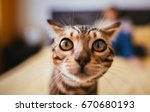 Stock photo bengal cat smells a camera standing on the bed 670680193
