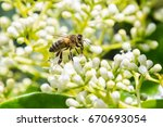 bees flying and collecting food ... | Shutterstock . vector #670693054