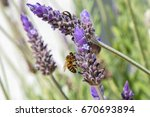 bees flying and collecting food ... | Shutterstock . vector #670693894