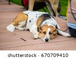 Small photo of Cute adult abandoned Dog with sad eyes from shelter waiting to be adopted. Concept of Loneliness, uselessness and social problem of homeless animals, adoption