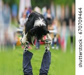 Small photo of Dexterous performance of capable dog with owner. Almost circus acrobatic stunt. Concept of friendship between man and dog. Happiness in motion, sports training, show